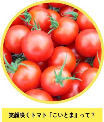 笑顔咲くトマト『こいとま』って?