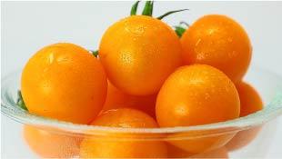 【こいとま】シンディーオレンジ